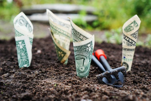 Image of money being planted in the garden as a play on how to save